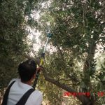 Competitiveness of Olive Crop in Jordan